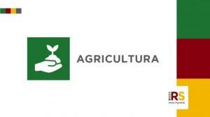 Ministério da Agricultura do RS anuncia medidas para produtores prejudicados pela estiagem e pandemia de Covid-19